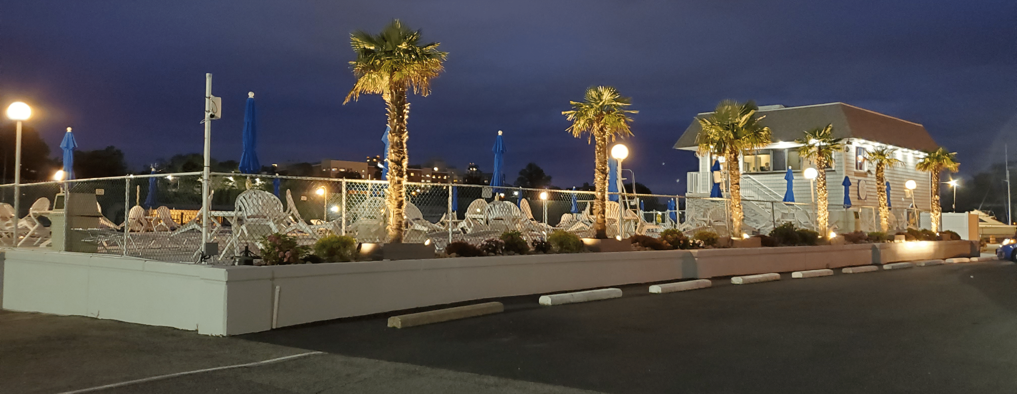 Imperial Yacht Club Palm Trees